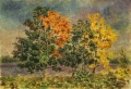 Осенние клёны